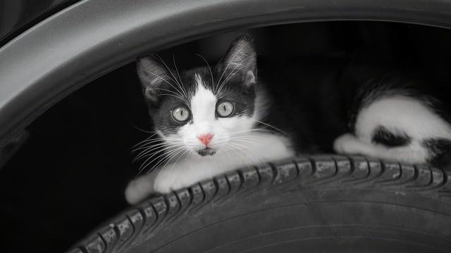 Kat ontsnapt aan gruwelijke dood doordat een jongen hem wegjaagde net voordat ik weg wilde rijden.